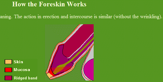 Foreskin wont retract when erect