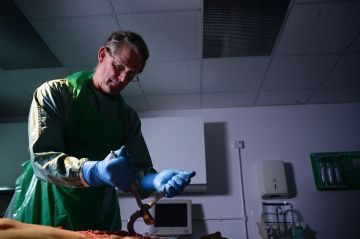 Dr. Shepherd cutting the simulated body. Photo: Channel 5
