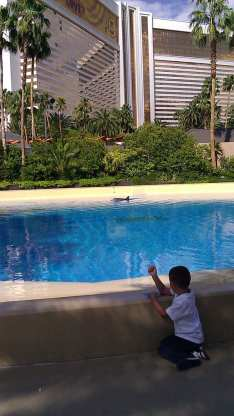 mirage-hotel-and-dolphin-pool